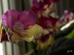 7881990_Lalique.jpg