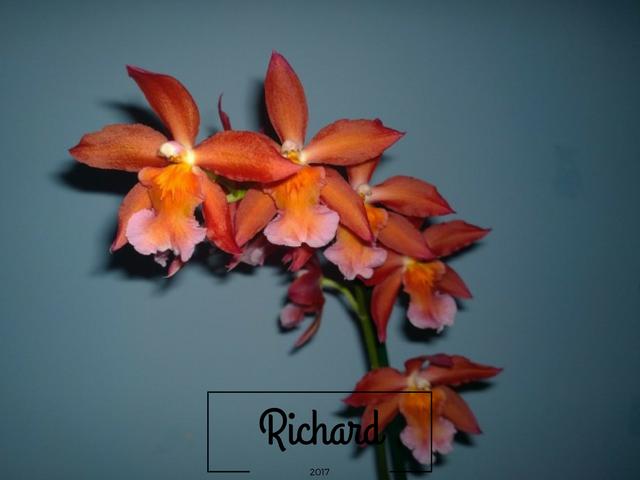 Richard-2-10.png