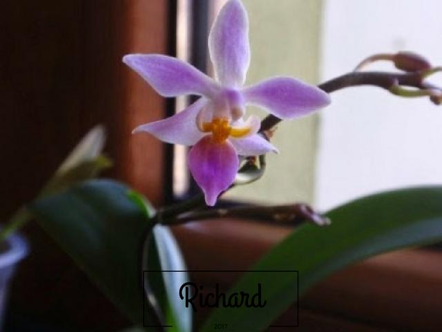 Richard-20.png