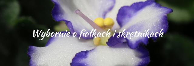 Wybornieofiokachiskrtnikach-2.png