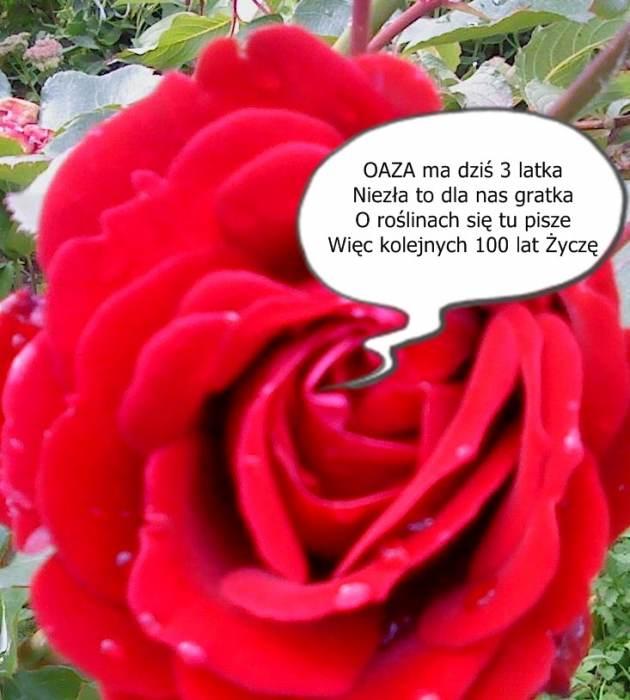 DSC00071.jpg