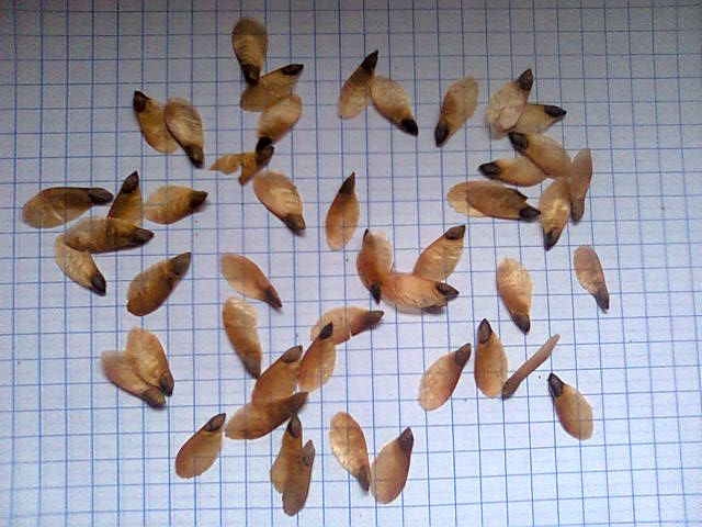 nasionaswierk.jpg