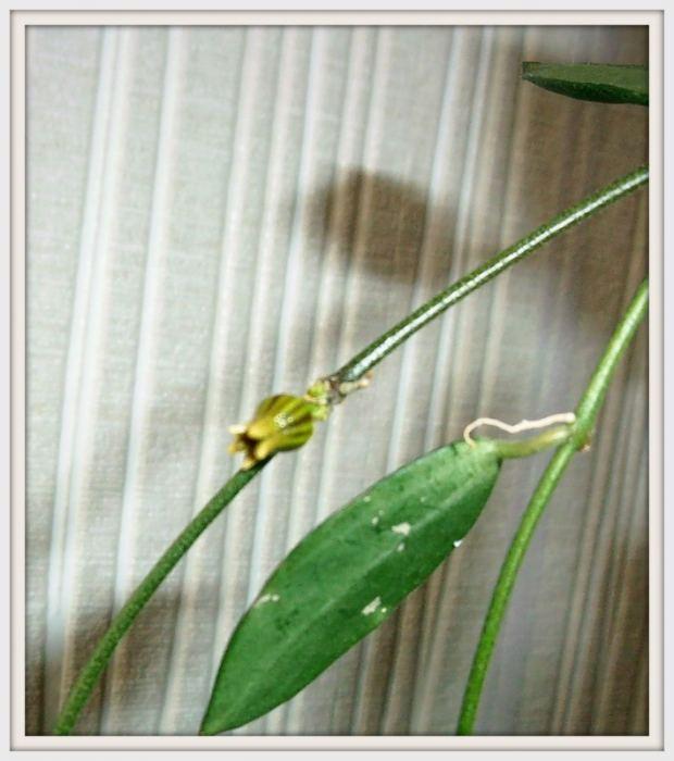 Kwiat1.jpg