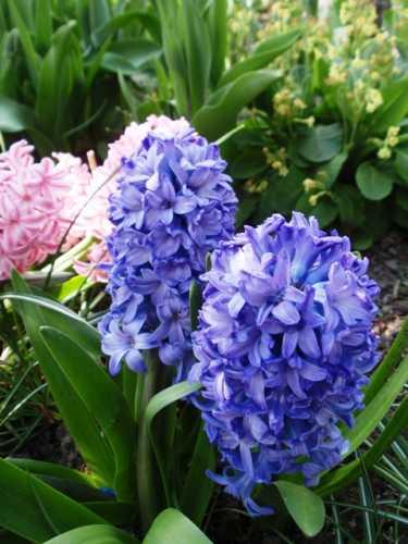 28_2012-05-03.JPG