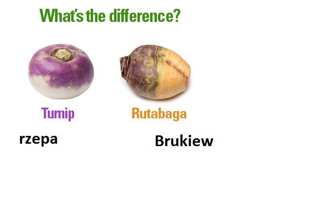 Rutabaga-turnip.jpg