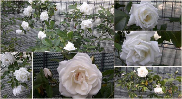Collage_HD2017-12-2413_29_47.jpg