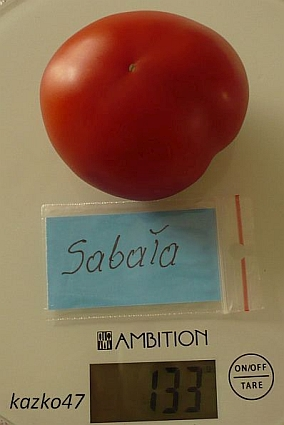 Sabaa1.jpg