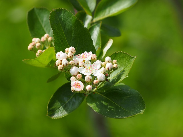 blossom-1478147_640.jpg
