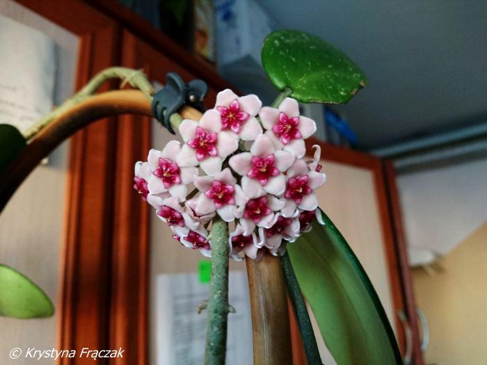 obovataspotkwiat.jpg