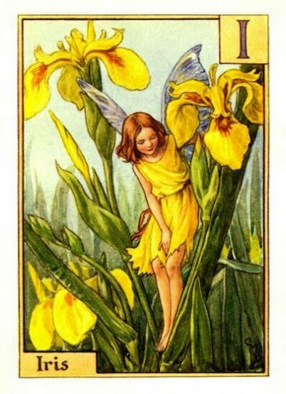 Iris-Flower-Fairy.jpg