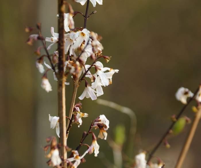 abelion-kwiat2.jpg