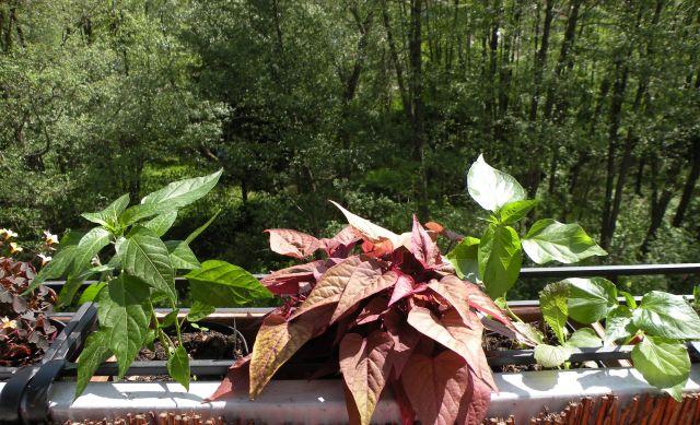 balkon-rosliny-1.jpg