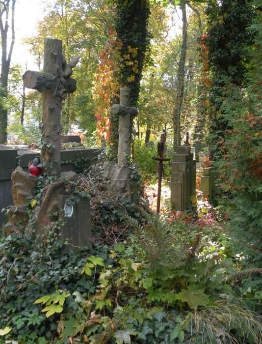 cmentarz-lyczakowski-bluszcz-stare-krzyze.jpg
