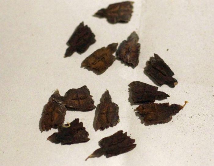 cyklantera-nasiona.jpg