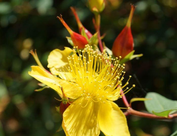 dziurawie-owoce-kwiaty.jpg