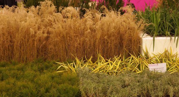 gardenia-2017-kompozycja-trawy-2.jpg