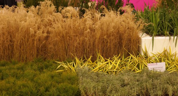 gardenia-2017-kompozycja-trawy.jpg