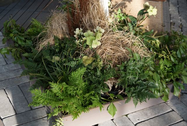 gardenia-2017-paprocie-trawy.jpg