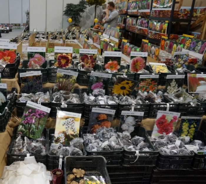 gardenia-kiermasz1.jpg