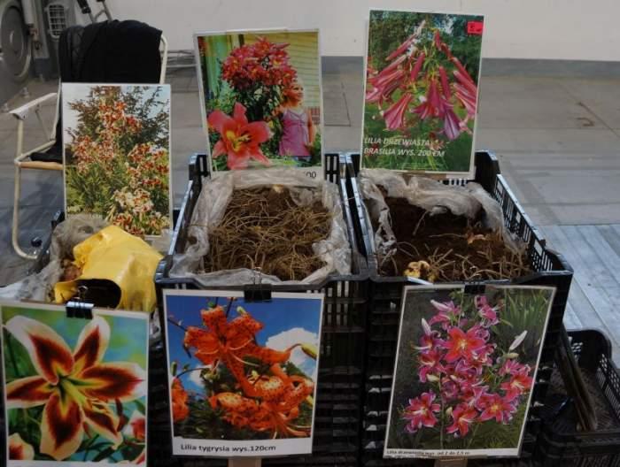 gardenia-kiermasz2.jpg