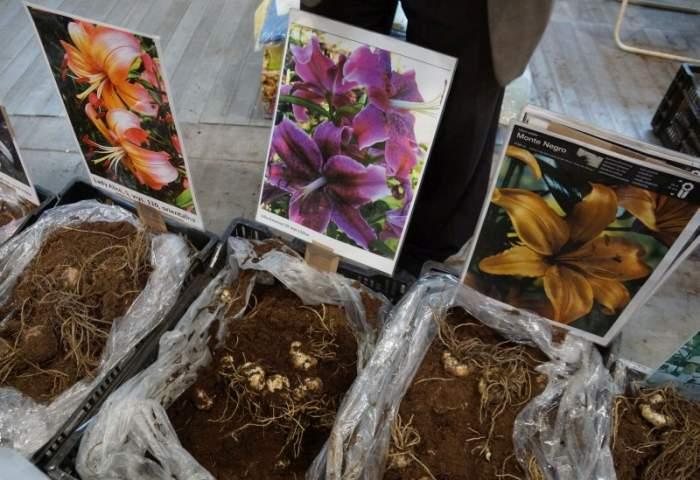 gardenia-kiermasz3.jpg