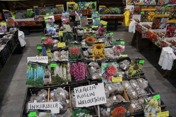 gardenia-kiermasz6.jpg