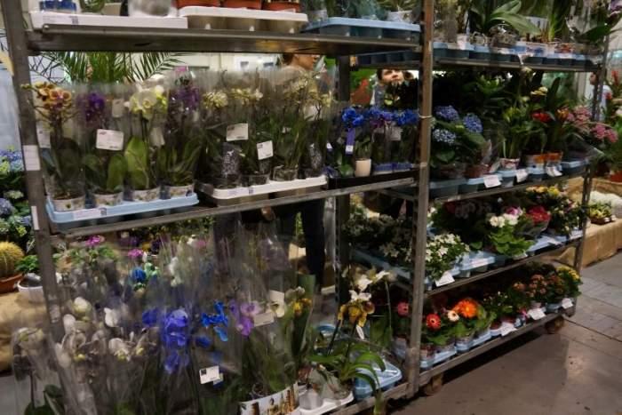 gardenia-kwiaty-doniczkowe1.jpg