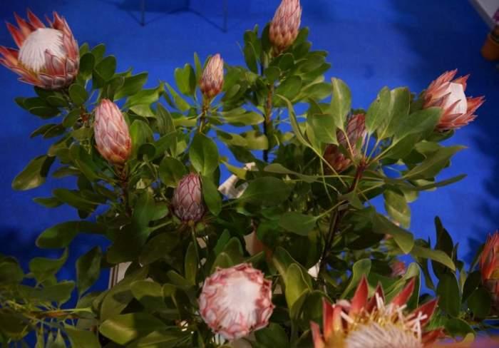 gardenia-kwiaty-doniczkowe2.jpg
