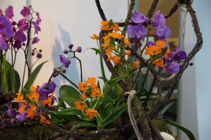gardenia-storczyki.jpg