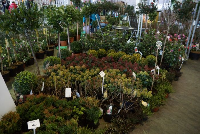 gardenia-straganiki.jpg