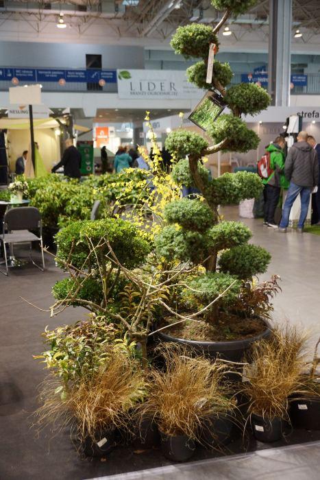 gardenia-topiary.jpg