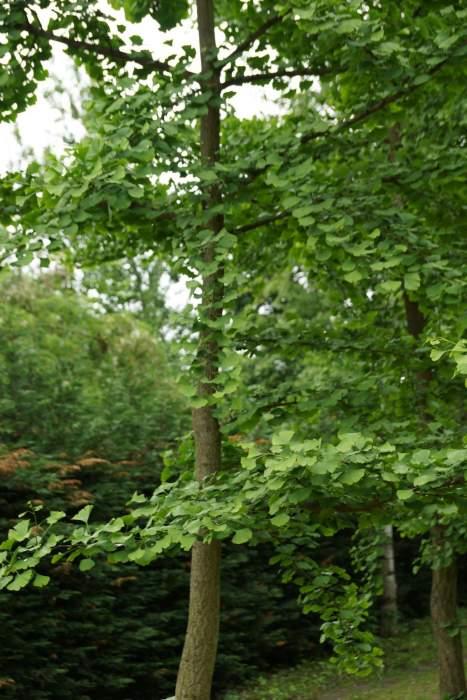 milorzab-drzewko.jpg