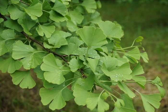 milorzab-drzewko1.jpg