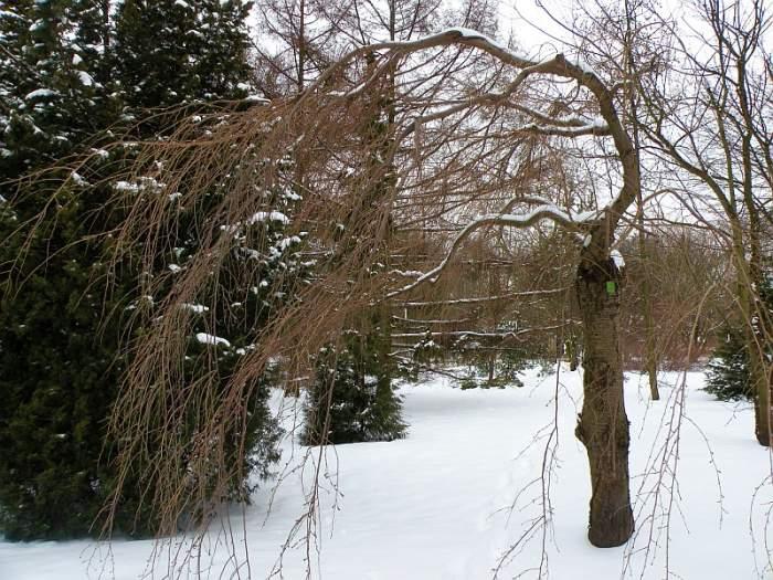 ogrod-botaniczny-japonia.jpg