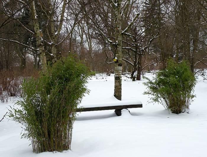 ogrod-botaniczny-japonia1.jpg