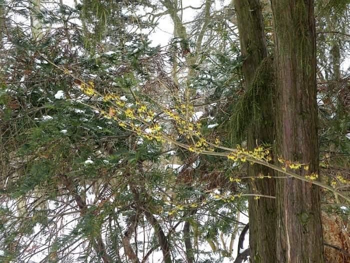 ogrod-botaniczny-kwiaty.jpg