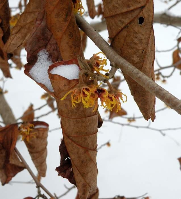 ogrod-botaniczny-kwiaty2.jpg