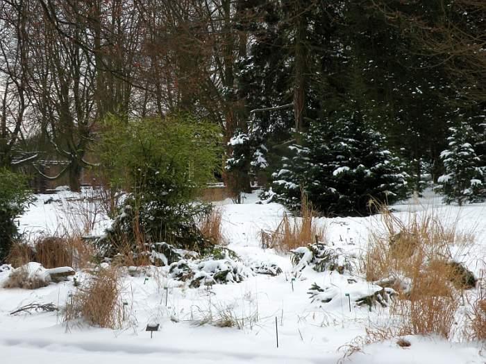 ogrod-botaniczny-trawy.jpg