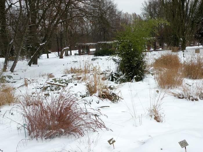 ogrod-botaniczny-trawy1.jpg