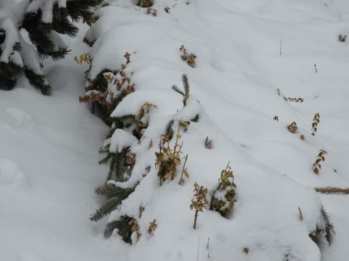 ogrod-botaniczny14.jpg