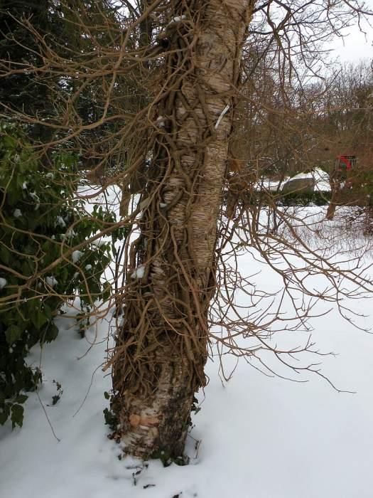 ogrod-botaniczny23.jpg