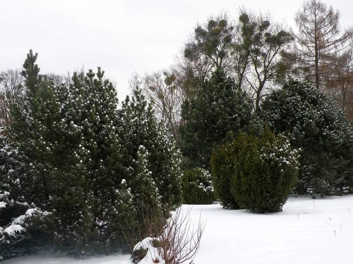 ogrod-botaniczny3.jpg
