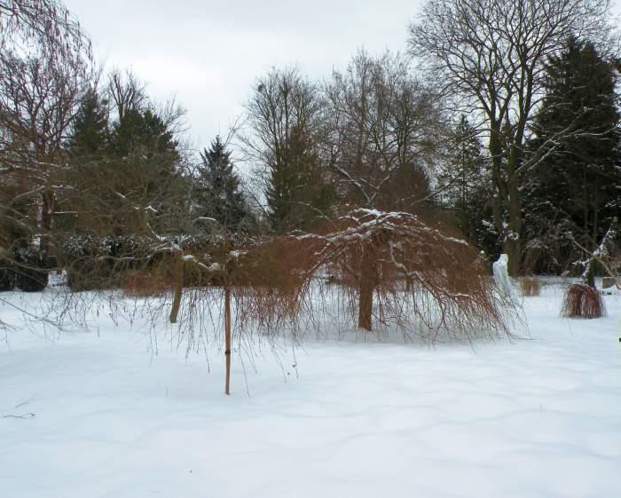 ogrod-botaniczny4.jpg