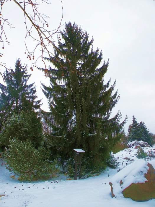 ogrod-botaniczny6.jpg