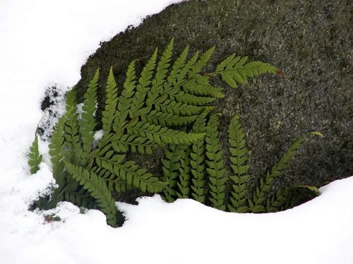 ogrod-botaniczny9.jpg