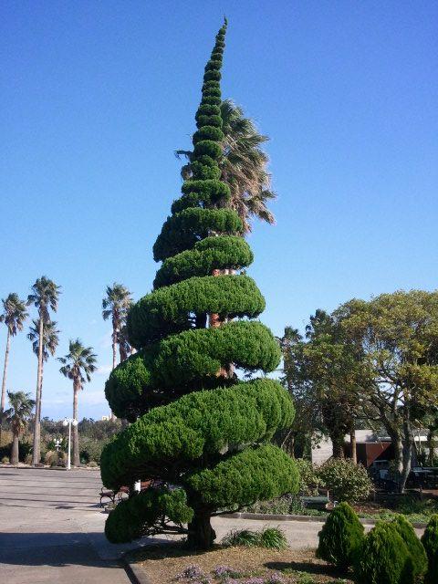 ogrod-japonski-korea-drzewa-topiary2.jpg