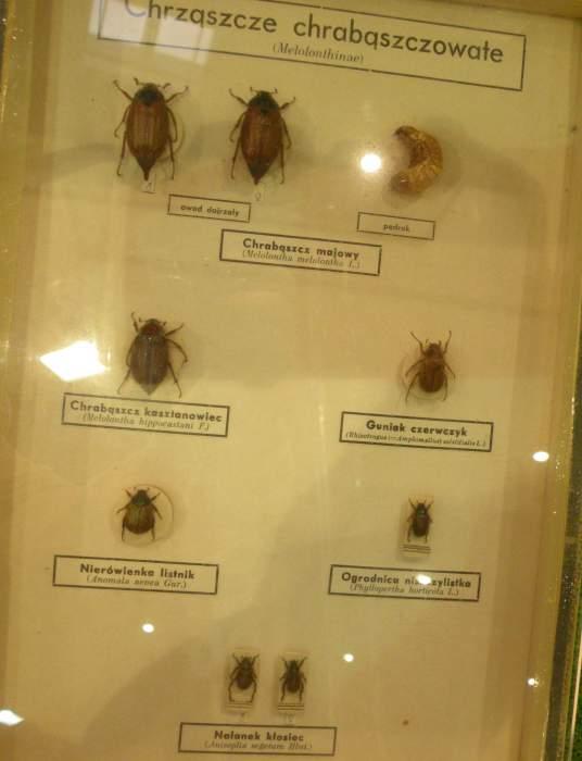 owady5.jpg