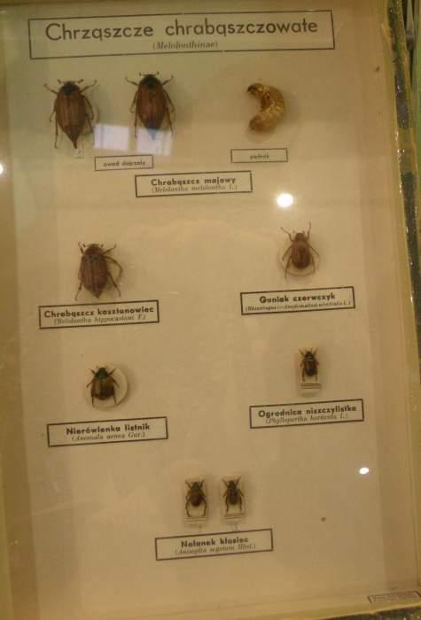 owady6.jpg