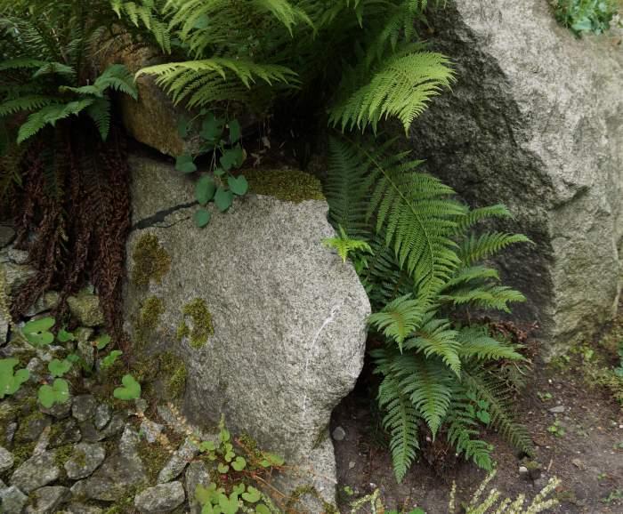 paprocie-alpinarium.jpg