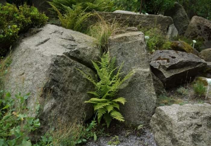 paprocie-alpinarium5.jpg